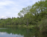 妙高山と御鹿池シンボルツリー